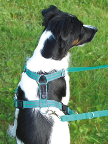 The Mekuti Balance Dog Harness: stop your dog pulling on the lead.